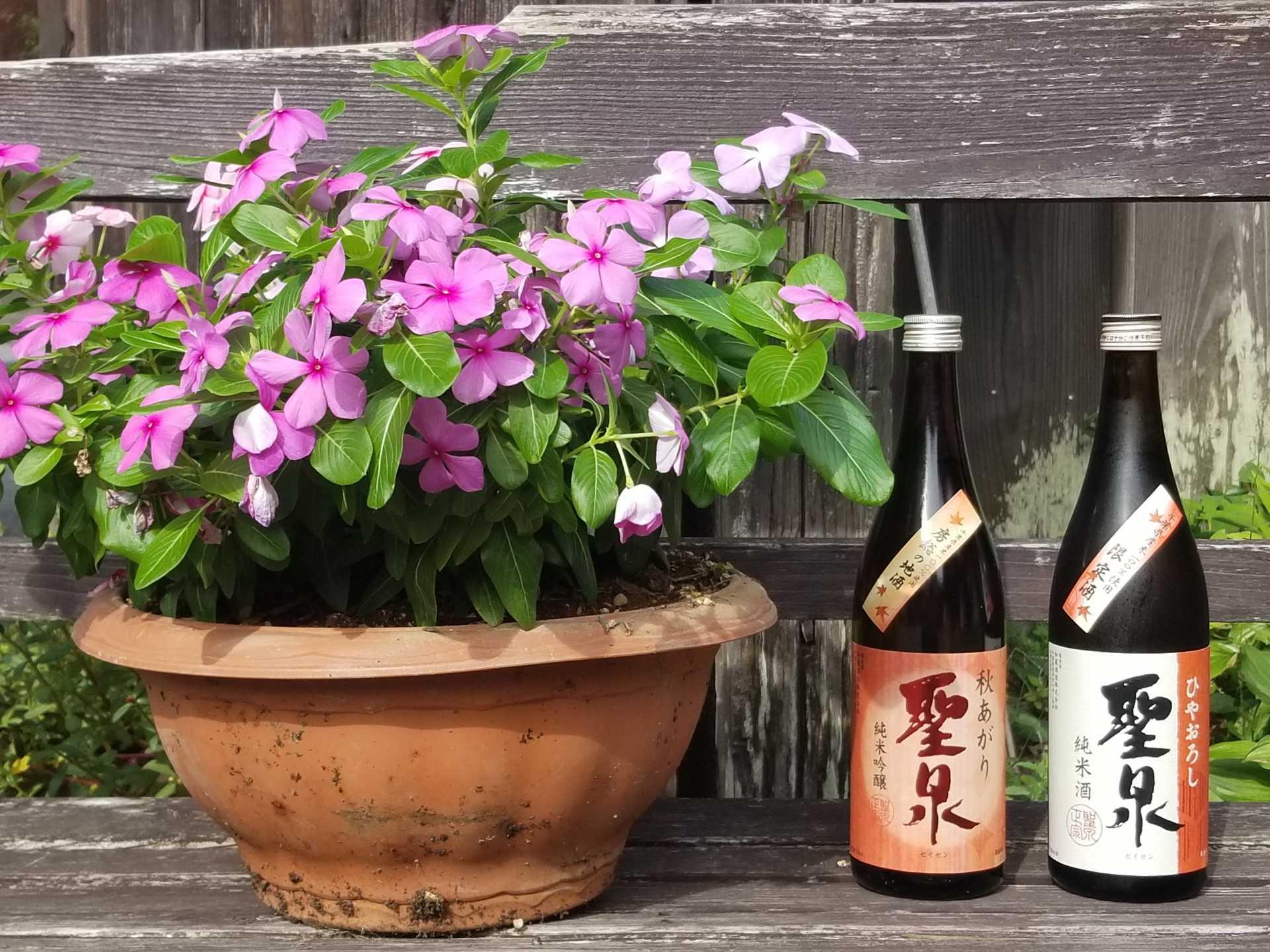 秋の味覚を引き立てる「旬」の酒 発売しました!